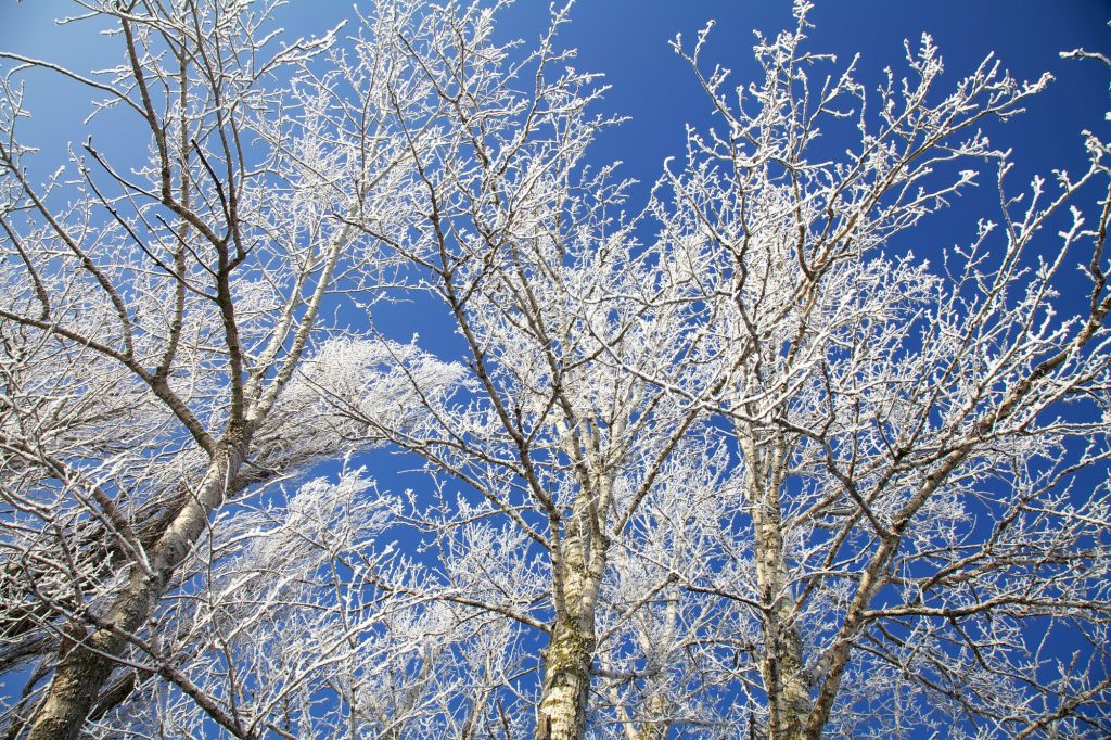 photo of frosted trees and blue sky to indicate Pinterest december trends